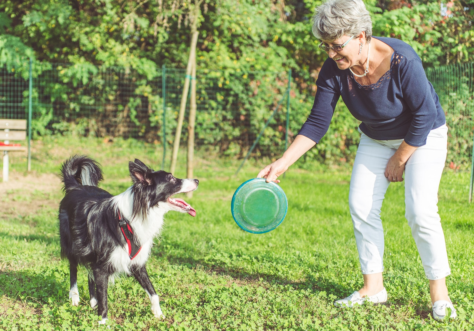 Elder woman holding frisbee for black and white shepherd dog to play with.