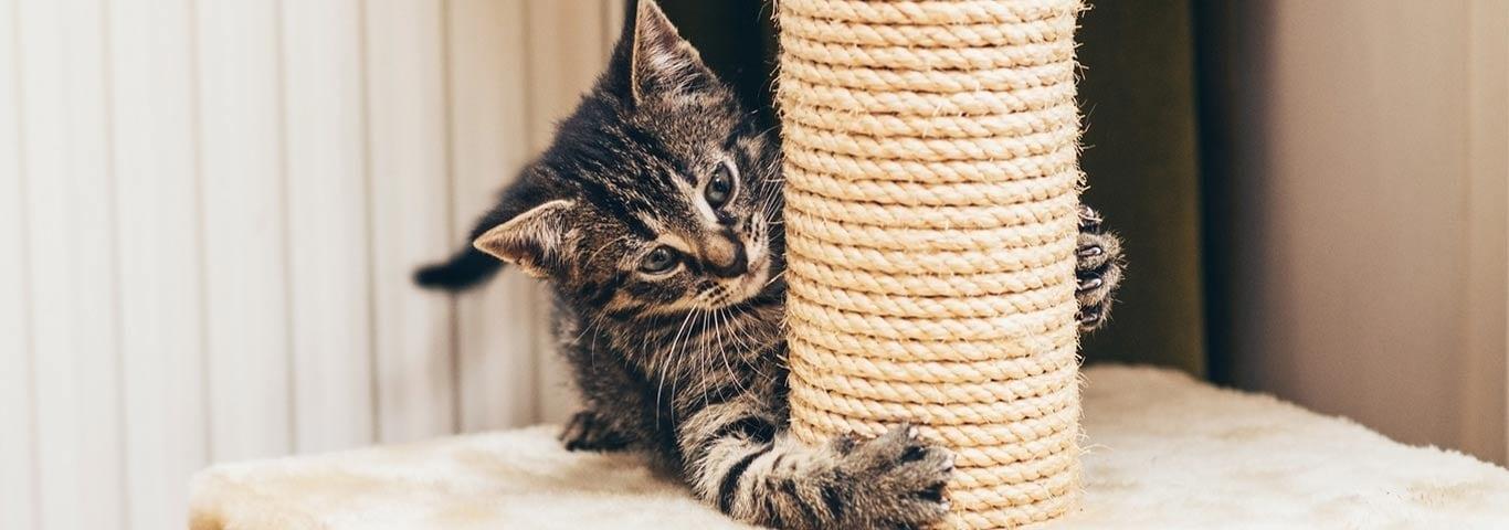https://www.hillspet.nl/content/dam/cp-sites/hills/hills-pet/en_us/img/article/striped-kitten-with-scratching-post.jpg