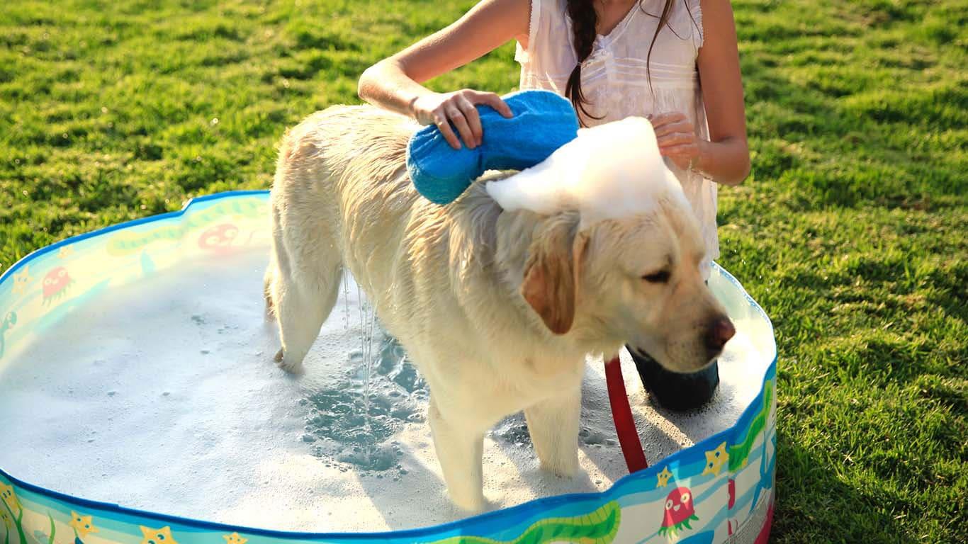Image result for dog care
